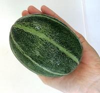 収穫した手のひらサイズのメロン