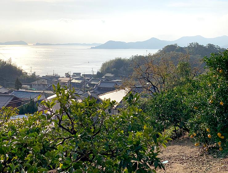 生口島_レモン畑からの眺望