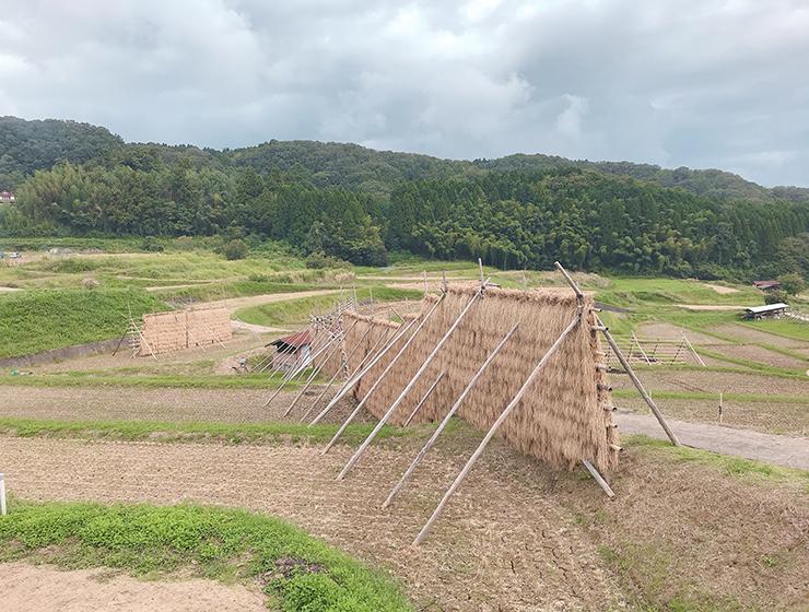 真菰を栽培する山王寺は棚田百選に選ばれています