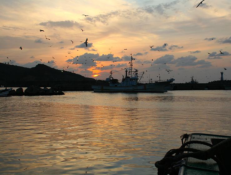 一日漁の帰港の様子