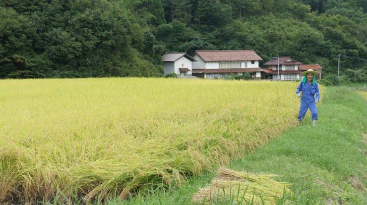 うやま米の産地
