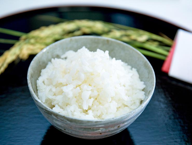 ご飯と稲穂