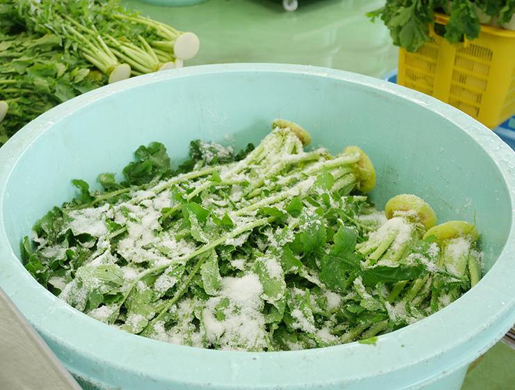 大根菜の塩漬け